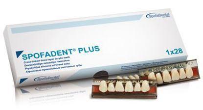 Гарнитур зубов Spofadent Plus (полный набор)